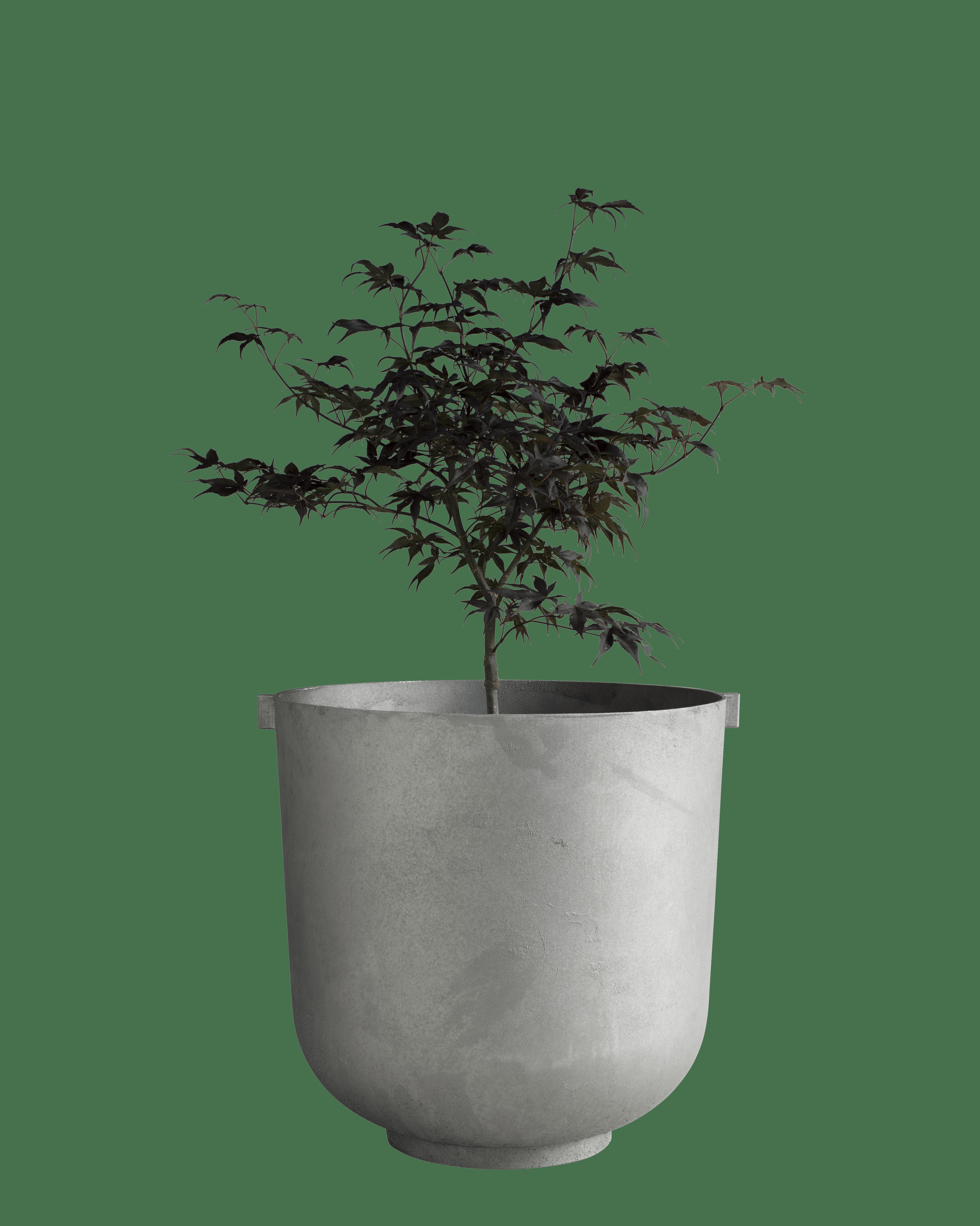 Castle Raw Medium Plants