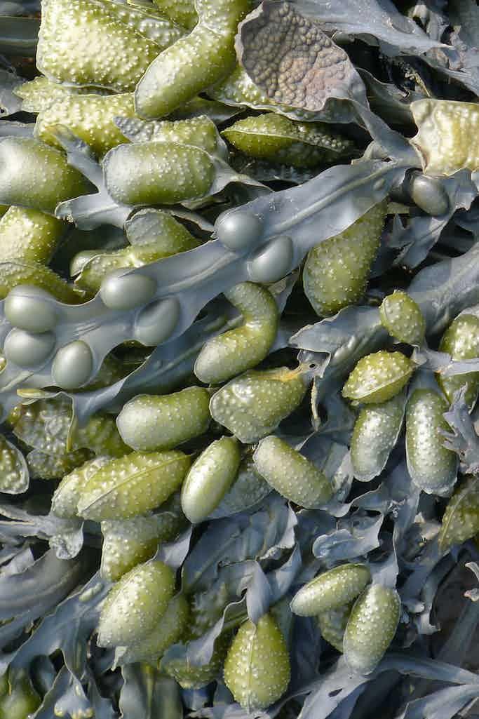 Moooi Carpets Sea Weed Carpet Haute Living